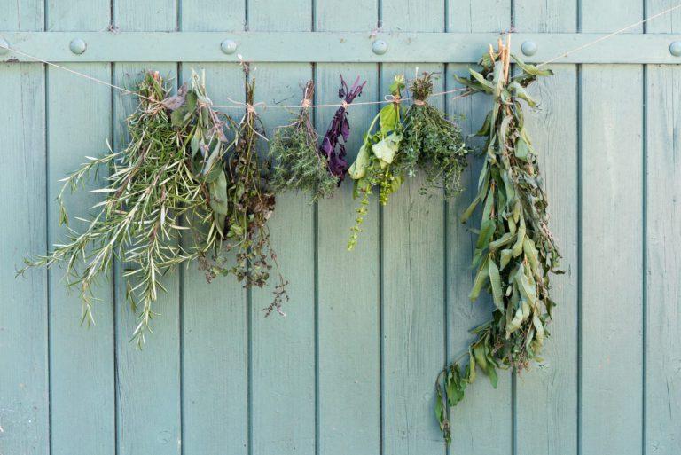 sécher ses plantes