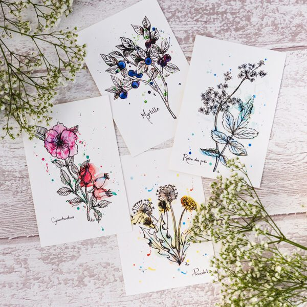 carte postale herboriste