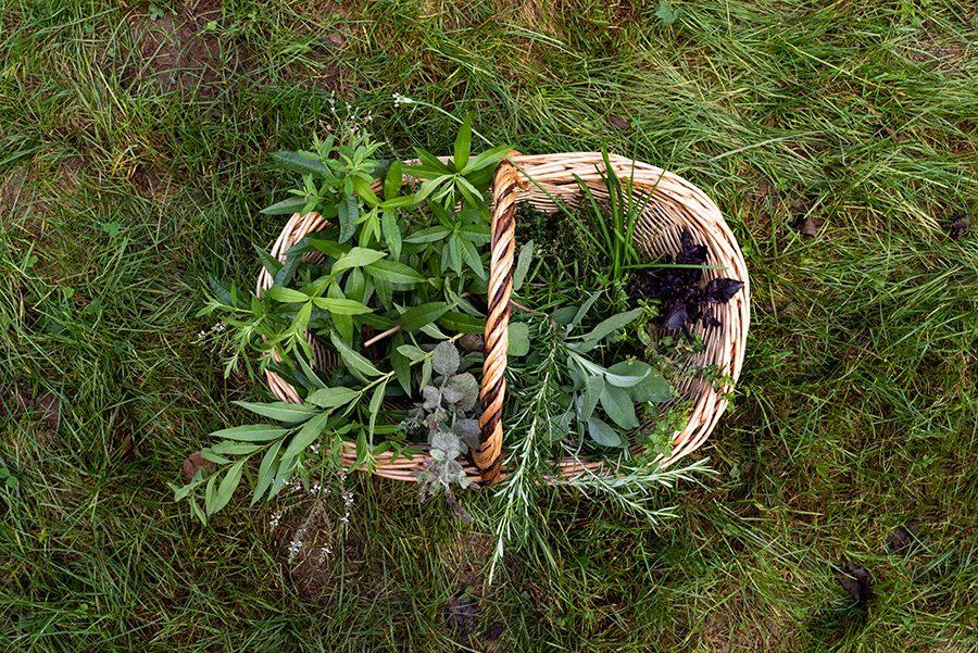 conseil cueillette plantes sauvages